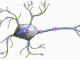 Neural Agents